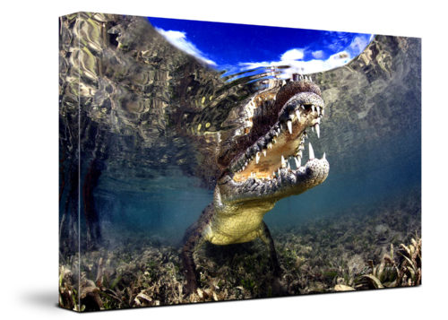 Crocodile Canvas Wall Art Handmade – 24 x 36 inches (60 x 90 cm) – Unframed – Signed by Artist