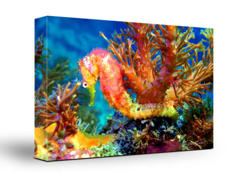 Seahorse Canvas Wall Art Handmade – 24 x 36 inches (60 x 90 cm) – Unframed – Signed by Artist