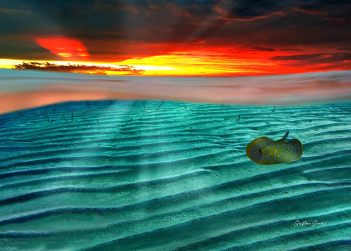 Underwater Stingray Canvas Wall Art Handmade – 24 x 36 inches (60 x 90 cm) – Unframed – Signed by Artist