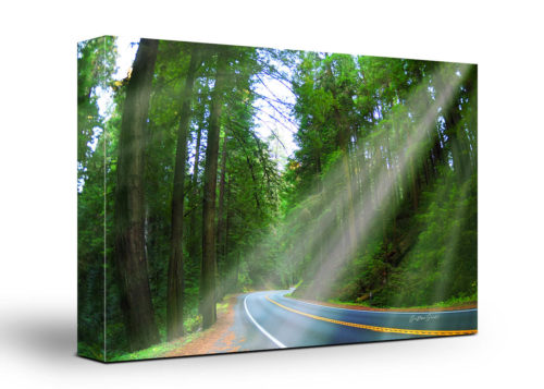 Sequoias Forest Canvas Wall Art Handmade – 24 x 36 inches (60 x 90 cm) – Unframed – Signed by Artist