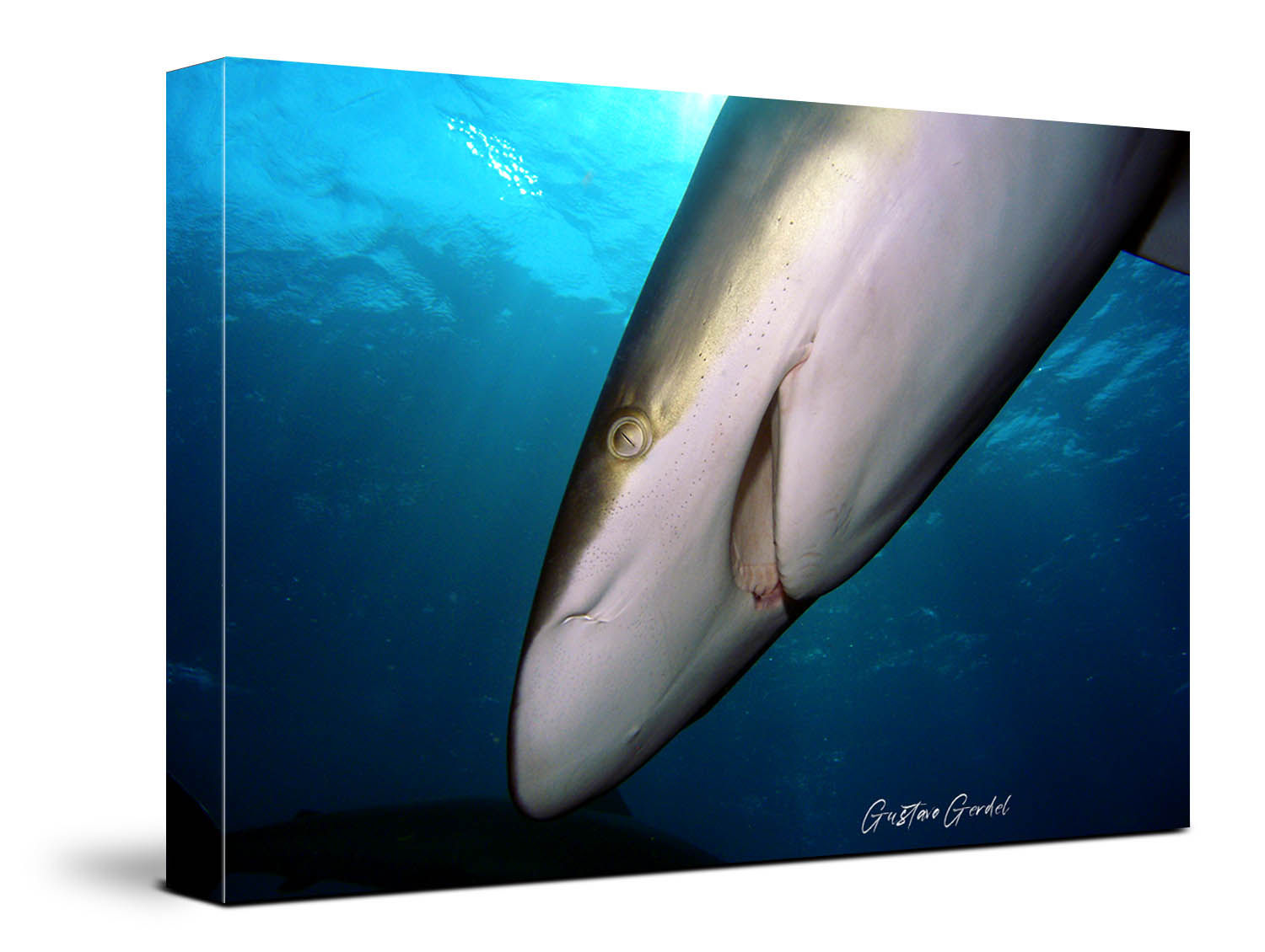 Shark Wall Art Underwater